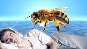 في, حلم, تفسير, النحل, الحلم